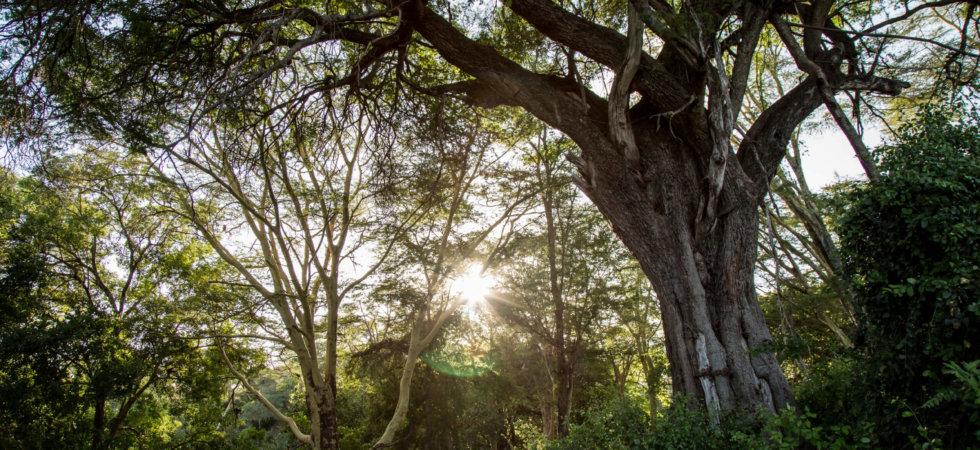 Apple pflanzt für 200 Millionen Dollar Bäume gegen die Erderwärmung